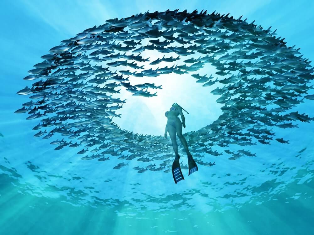 Potápěčka a kruh ryb okolo ní